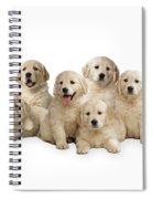 Golden Retriever Puppies, In A Line Spiral Notebook