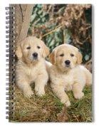 Golden Retriever Puppies In The Woods Spiral Notebook