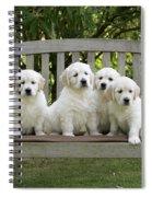 Golden Retriever Puppies Spiral Notebook