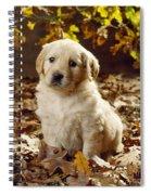 Golden Retriever Puppy Dog In Fallen Spiral Notebook