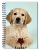 Golden Retriever Puppy With Rose Spiral Notebook