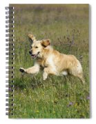 Golden Retriever Running Spiral Notebook