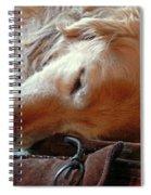 Golden Retriever Sleeping With Dad's Slippers Spiral Notebook