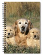 Golden Retriever With Puppies Spiral Notebook