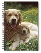 Golden Retrievers Dog And Puppy Spiral Notebook
