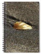 Golden Shell Spiral Notebook