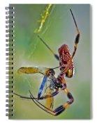 Golden Silk Orb With Blue Dragonfly Spiral Notebook
