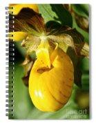 Golden Slipper Spiral Notebook