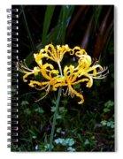 Golden Spider Lily Spiral Notebook