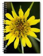 Golden Star Flower Yellow Salsify Glacier National Park Spiral Notebook