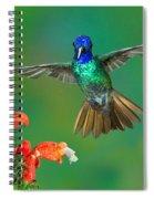 Golden-tailed Sapphire At Flower Spiral Notebook