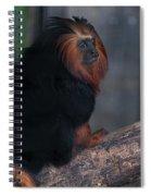 Golden Tamarin Spiral Notebook