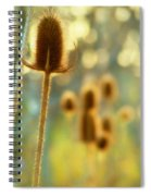 Golden Teasels Spiral Notebook