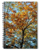 Golden Tree Lined Sky Spiral Notebook
