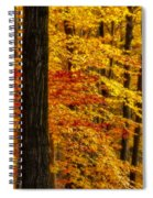 Golden Trees Glowing Spiral Notebook