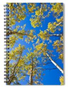 Golden View Looking Up Spiral Notebook
