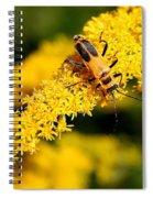 Goldenrod Beetle Spiral Notebook
