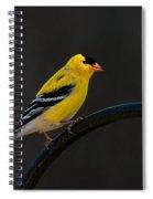 Goldfinch 3 Spiral Notebook