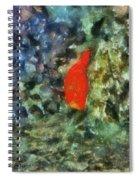 Goldfish Photo Art 05 Spiral Notebook