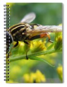 Good Guy Hoverfly  Spiral Notebook
