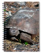 Gopher Turtle Spiral Notebook