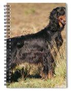 Gordon Setter Dog Spiral Notebook