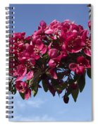 Gorgeous Hot Pink Spiral Notebook