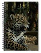Gorgeous Jaguar Spiral Notebook