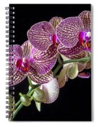Gorgeous Orchids Spiral Notebook