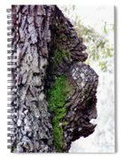 Gorilla Face In The Tree Spiral Notebook