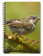 Gorrion House Sparrow Spiral Notebook