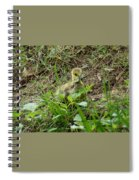 Gosling Chewing On Some Grass Spiral Notebook