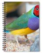 Gouldian Finch Spiral Notebook