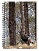 Gould's Wild Turkey IIi Spiral Notebook