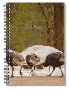 Gould's Wild Turkey V Spiral Notebook