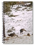 Gould's Wild Turkey Viii Spiral Notebook