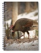Gould's Wild Turkey Vix Spiral Notebook