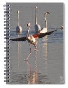 Graceful Flamingo Dance Spiral Notebook