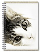 Grand Kitty Cuteness 3 High Key Spiral Notebook