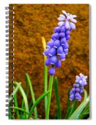 Grape Hyacinth And Sandstone  Spiral Notebook