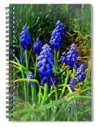 Grape Hyacinths 2014 Spiral Notebook
