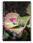 Grape Leaves In Spring Spiral Notebook