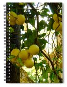 Grapefruits Spiral Notebook