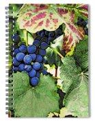 Grapes 3 Spiral Notebook