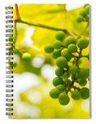 Grapes On The Vine - Finger Lakes Vineyard Spiral Notebook