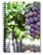 Grapes On Vine 2 Spiral Notebook