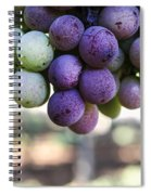 Grapes On Vine Spiral Notebook
