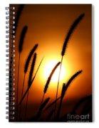 Grasses At Sunset - 1 Spiral Notebook