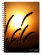 Grasses At Sunset - 2 Spiral Notebook