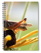 Grasshopper Antena Up Spiral Notebook